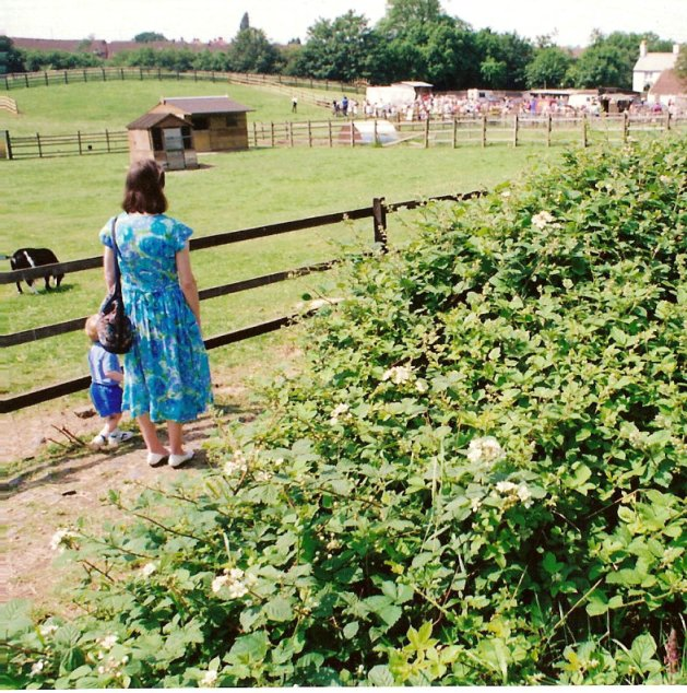 View of Woodgate Valley Urban Farm
